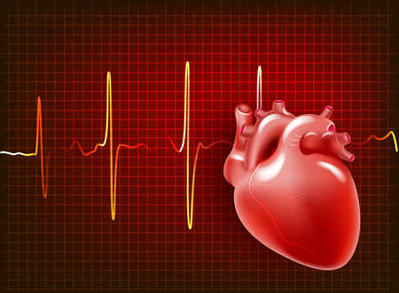 Human heart. realistic heart on the background of a cardiogram vector