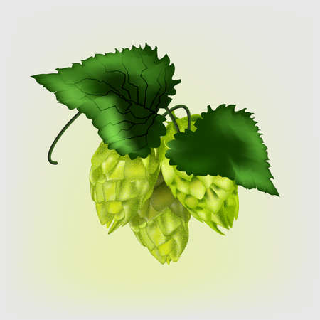 Realistic hop cones with green leaves. vector