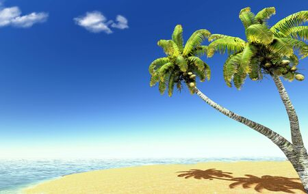 Beach and palms photo