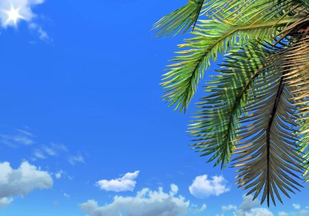 Палм бранч и небо