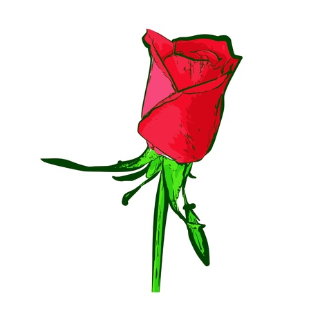 Red Rose - vector