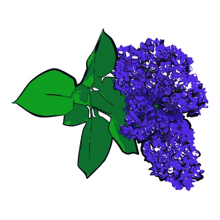 branch of lilac - vector Vector