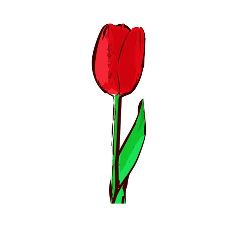 tulip - vector Stock Vector - 13285654