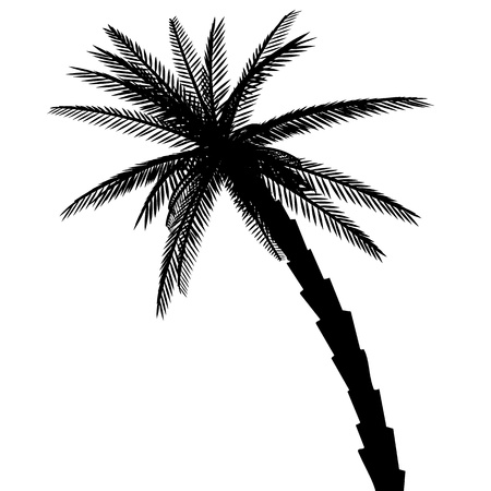 Isolated palm. Silhouette