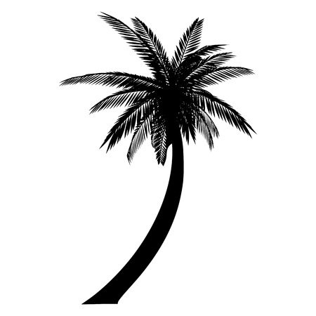 single tree: Isolated palm. Silhouette