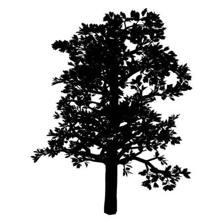 Tree. Isolated. Silhouette Illustration