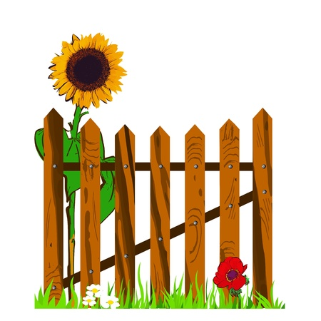 wooden fence and sunflower - vector Illustration