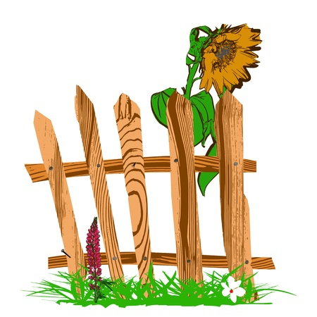 wooden fence and sunflower - vector Vector