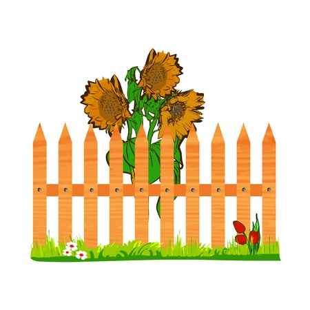 wooden fence and sunflowers - vector Vector