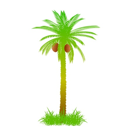 Palm and grass - vector Illustration