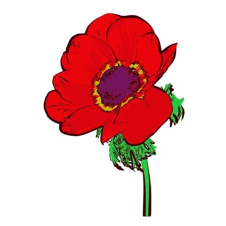 Flower isolated on white - vector Illustration