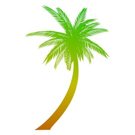 Palm. Geïsoleerd - vector