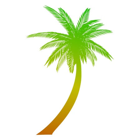 palm tree isolated: Palm. Isolated - vector