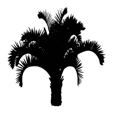 Palm. Isolated - vector  Vector