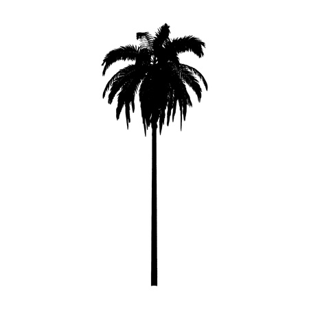 Palm. Isolated - vector  Illustration