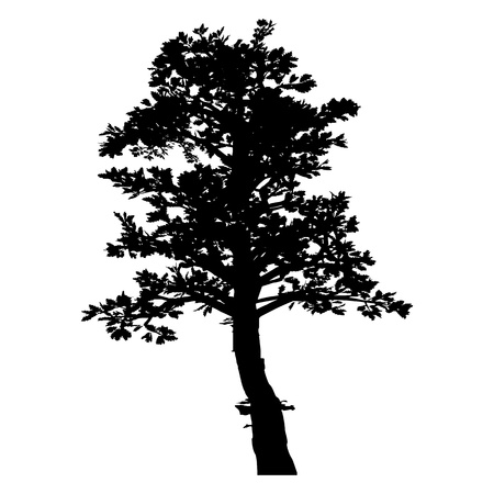 Tree. Isolated. Silhouette - vector