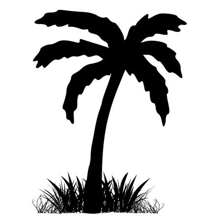 Palm and grass. Silhouette - vector