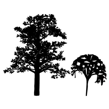 Trees. Isolated. Silhouette - vector