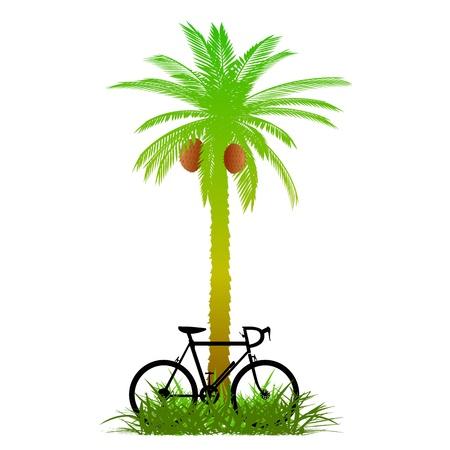пальмы и велосипед - вектор