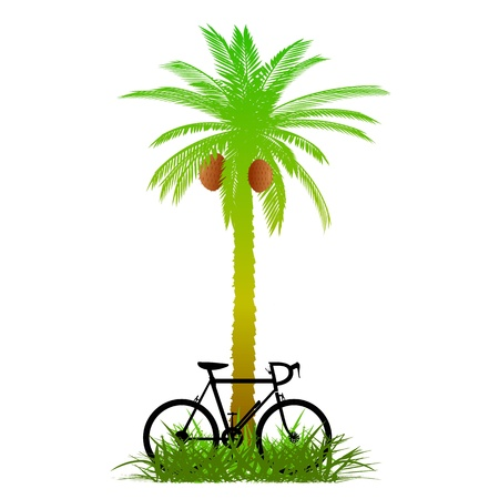 palm and bicycle - vector