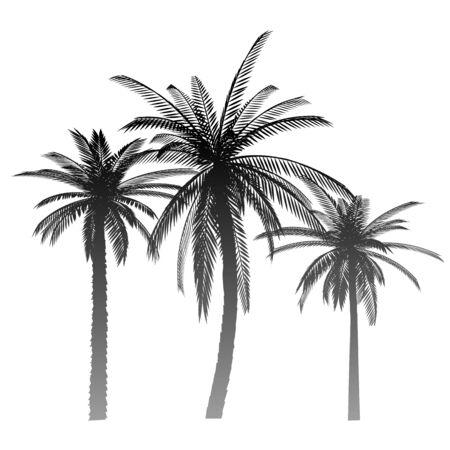 Palms - vector