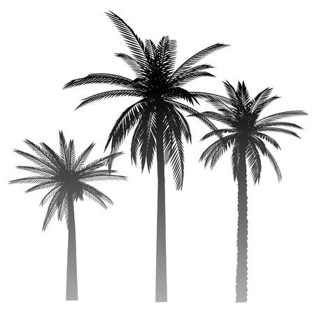 Palms - vector Vector