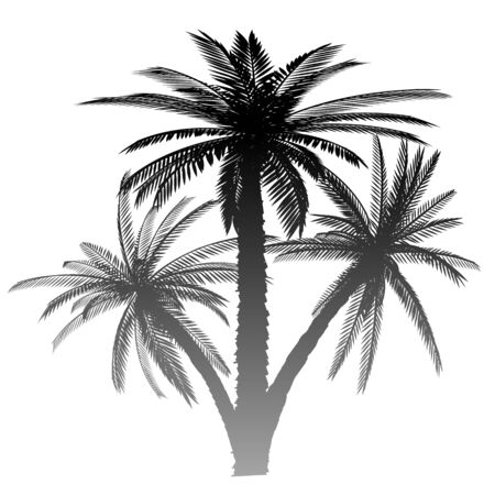 Palms - vector Stock Vector - 13427257