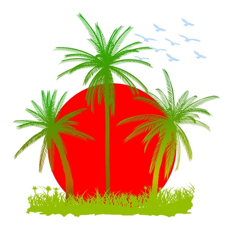 Palms, sun and birds - vector