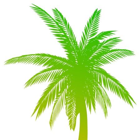 Palm. Isoliert - vector Vektorgrafik
