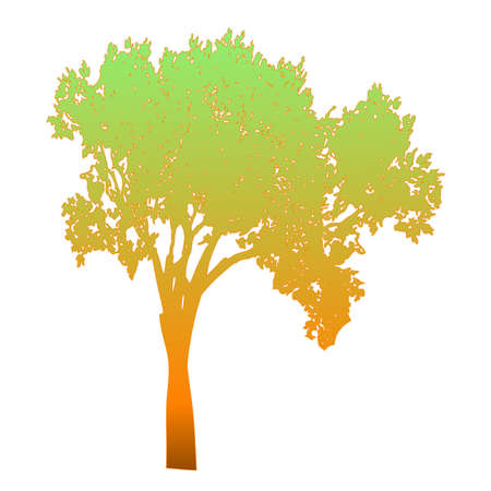 Tree  Isolated - vector