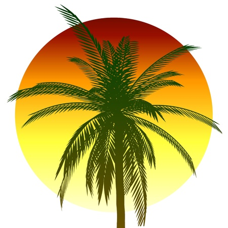 coconut palm: Palm and sun - vector