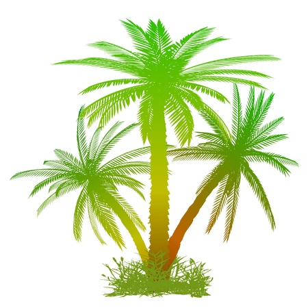 Palms and grass - vector Illustration