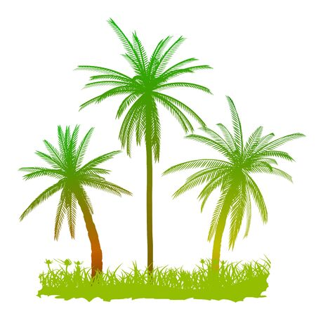 Palms and grass - vector Stock Vector - 13741645