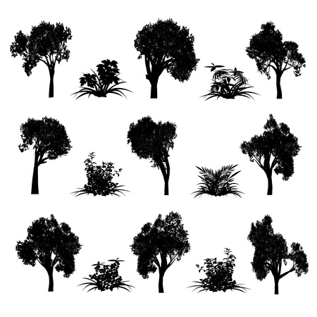 Trees and bush - vector Illustration