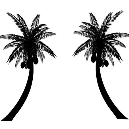 coconut tree: palms