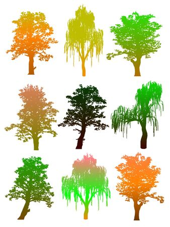 Trees. Isolated Stock Vector - 13754641