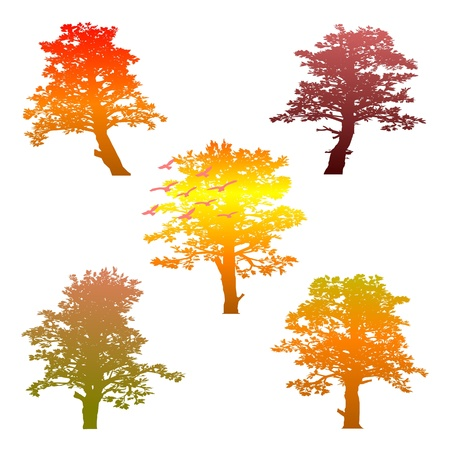 autumn trees and birds Stock Vector - 13767357