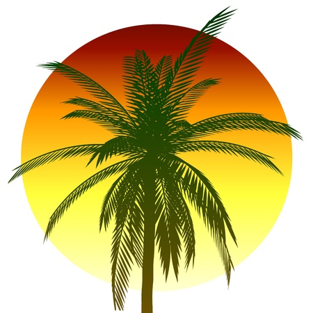 Palm and sun Stock Vector - 13764158