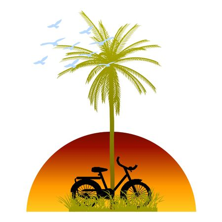 palm and bicycle Stock Vector - 13768763