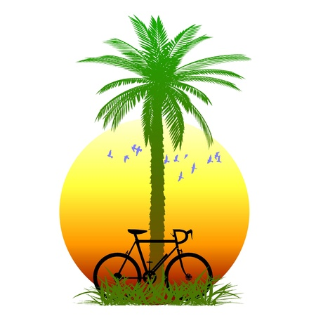 palm and bicycle Vector