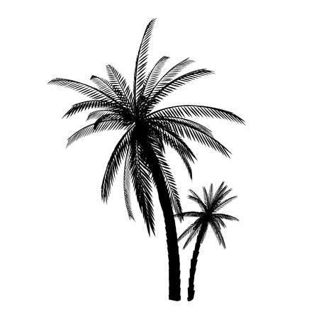 Palms. Isolated. Silhouette
