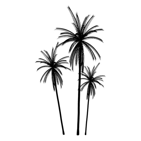 Palms. Isolated. Silhouette - vector