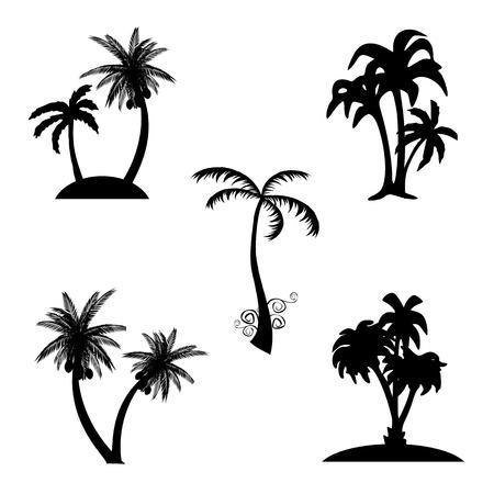 palm garden: Palms - vector