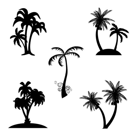 Palms - vector Vector