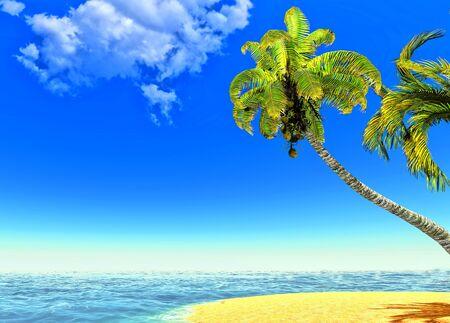 Beach and palms Stock Photo - 14324724