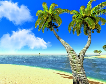 Beach and palms Stock Photo - 14324763