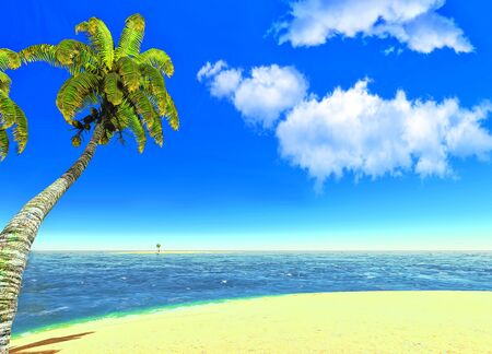 Beach and palms Stock Photo - 14324715