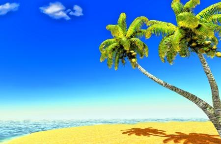 Beach and palms Stock Photo - 14324735