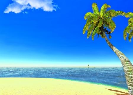 Beach and palms Stock Photo - 14324709