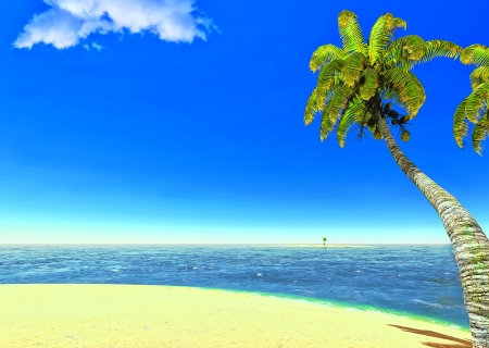 Beach and palms Stock Photo - 14324709